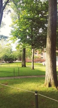 Pretty trees at Harvard Yard